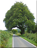 NR9275 : Overhanging trees near Melldalloch by Thomas Nugent
