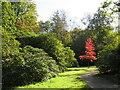 SE2753 : Autumn colour at Harlow Carr Gardens, Harrogate by Malc McDonald