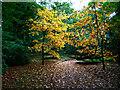 SJ7387 : Autumn colour in the woodland garden, Dunham Massey by Humphrey Bolton