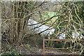 TQ5262 : River Darent by N Chadwick