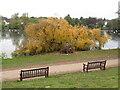 ST1879 : Fallen tree by Roath Park Lake by Gareth James