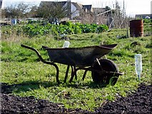 SO8700 : Friday Street allotments by Helena Downton