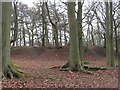 SU5172 : Grimsbury Castle: Iron Age Hill Fort by Pam Brophy