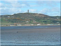 J4772 : Scrabo Tower by Michael Parry