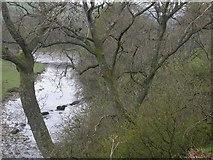 NY9126 : River Tees by Ben Gamble