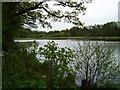 SO8577 : Hurcott Pool by Martyn B