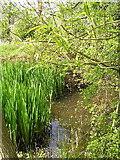 SP0058 : Little pond near Perry Mill Farm. by Richard  Dunn