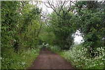 SU7824 : The Sussex Border Path by Martyn Pattison