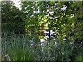 SP0255 : Bulrushes by Abbots Morton Church by Richard  Dunn