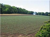 NT4676 : Potato field, Setonhill by Richard Webb