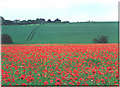 SK9975 : Poppies and arable land by Chris Coleman
