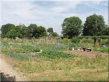 TQ0485 : Allotments, New Denham by David Hawgood