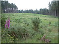 SU1010 : Boveridge Heath, Verwood by Stuart Buchan