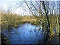 SJ8093 : Wild Fowl Sanctuary by Dave Smethurst