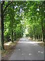 TQ5192 : The Drive, Bedfords Park, Collier Row, Essex by John Winfield