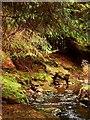 NZ0193 : Faerie Glen by Christine Westerback