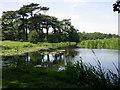 SJ5509 : Tern seen from the Weir by Kokai