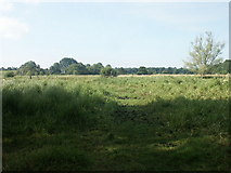 TG2105 : Marston Marshes by Katy Walters