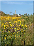 SW3629 : Cornish meadow by Sheila Russell