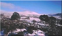 NO1795 : Pine remnants, Creag a' Chait by Richard Webb