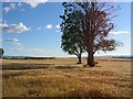 NO0225 : Barley Field, Methven by Richard Webb