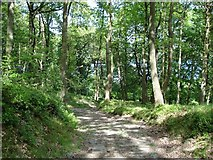 SD3898 : Woodland to the west of Belle Grange by Ian Cunliffe