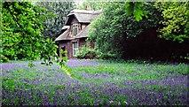 TQ1776 : Queen Charlotte's Cottage, Kew Gardens by Christine Matthews