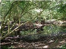 TQ5782 : Clay Scrape in Belhus Woods by Glyn Baker