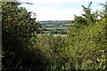 SP0748 : Trees on Cleeve Hill, near Cleeve Prior by Philip Halling