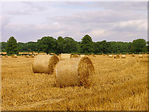 ST8180 : Farmland near Acton Turville by Pam Brophy