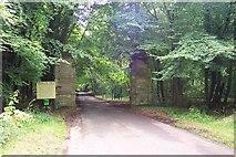 SU2168 : Savernake Forest by Ron Strutt