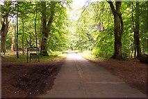 SU2464 : Savernake Forest by Ron Strutt