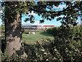 SJ3671 : Farm by Dennis Turner