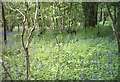 ST8352 : Wood at Brokerswood Country Park by Alan Cooper