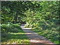 SU2408 : Footpath in Bolderwood Grounds, New Forest. by Clive Perrin