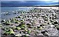 NH8298 : Golspie Beach by Christine Matthews