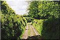 SS9228 : Dulverton: track running south to Jury Cross by Martin Bodman