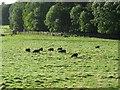 NT0878 : Parkland, Abercorn. by Richard Webb
