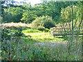 NZ2524 : School Aycliffe Wetland by Mick Garratt