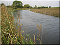 SK8037 : The disused Grantham Canal near Bottesford, Leicestershire by Kate Jewell