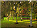 ST8590 : Birches and Acers at Westonbirt by Pam Brophy