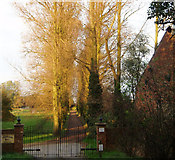 TF5902 : Avenue of Italian poplars, in evening sunshine. by Dr Charles Nelson