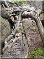 TQ5335 : Biological weathering, Harrison Rocks by N Chadwick