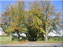 SU5751 : Malshanger Lane by Simon and Alison Downham