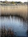 SX9879 : Pond in the Warren by Crispin Purdye
