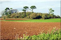 SX8757 : Waddeton Lane Plantation by Crispin Purdye