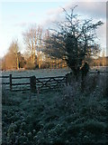 TG2105 : Two gates, Marston Marshes by Katy Walters
