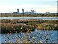 NZ5122 : Bird Reserve, Saltholme Marshes by Mick Garratt