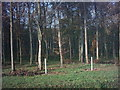 TM3672 : Part of Lodge Wood by Adrian Cable