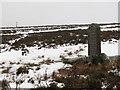 NT0752 : Covenanter's Grave by Callum Black